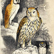 Nocturnal Scene With Three Owls Art Print