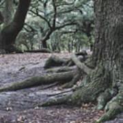 Norfolk Trees Art Print