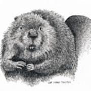 North American Beaver Art Print