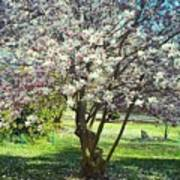 North American Magnolia Tree Art Print