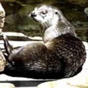 North American River Otter Art Print