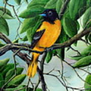 Northern Oriole Art Print