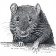 Norway Rat Art Print