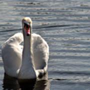 Not Another Swan Art Print