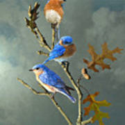 Nothing But Bluebirds Art Print