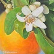Nouvelle Orange Art Print