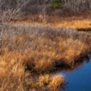November Brook And Wetland Barren  Art Print