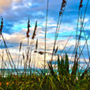 November Day At The Beach In Florida Print by Susanne Van Hulst