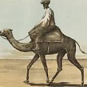 Noyes, Edward , Riding Camel Art Print