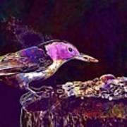 Nuthatch White Breasted Nuthatch  Art Print