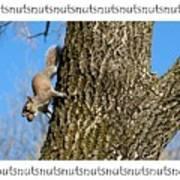 Nutsnutsnuts Art Print
