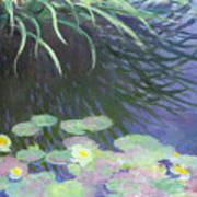 Nympheas Avec Reflets De Hautes Herbes Art Print