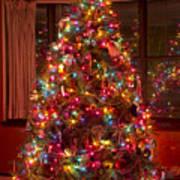 O Christmast Tree Art Print
