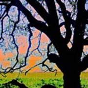 Oak At Elkhorn Art Print