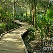 Oak Hammock Trail, Florida Art Print