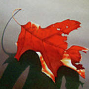 Oak Leaf 1 Art Print by Timothy Jones