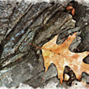Oak Leaf On The Rocks Art Print