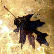 Oak Leaf Underwater Art Print