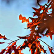 Oak Leaves 2 Art Print
