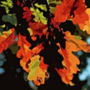 Oak Leaves In Autumn Art Print