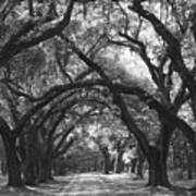 Oak Lined Drive Way, Coastal, South Carolina  Art Print