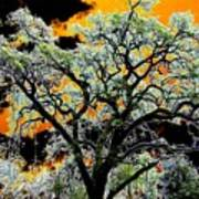 Oak Oasis Art Print