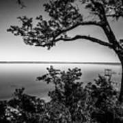 Oak On A Bluff - Black And White Art Print
