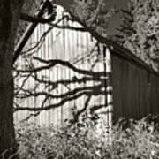 Oak Shadows On A Barn Art Print