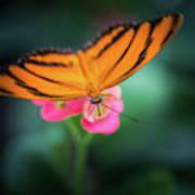 Oak Tiger Butterfly- 2 Art Print