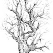 Oak Tree Abstract Study Art Print