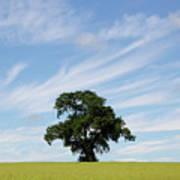 Oak Tree Landscape Art Print