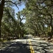 Oak Trees Along Live Oak Canyon Road Art Print