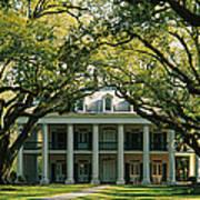 Oak Trees In Front Of A Mansion, Oak Art Print