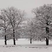 Oaks In Winter Art Print by Gabriela Insuratelu
