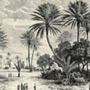 Oasis Of Gafsa  Tunis Art Print