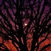 Ocala Moonrise Art Print