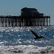 Oceanside Resident Photograph Art Print