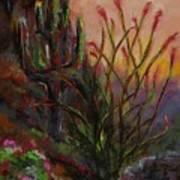 Ocotillo At Sunset Art Print