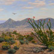 Ocotillo Paradise Art Print