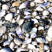 Ocracoke Shells Art Print