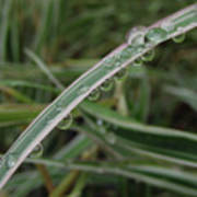October Rain 3 Art Print