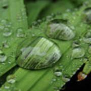 Big Drops Of Rain Art Print