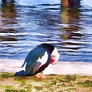 Odd Looking Duck In Swansboro Nc Art Print