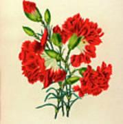 Oeillet Rouge Art Print