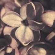 Of Lilac Tales She Tells Art Print
