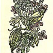 Of Sweet Vanilla Art Print