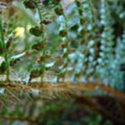 Office Art Fern Green Forest Ferns Giclee Prints Baslee Troutman Art Print