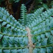 Office Art Forest Ferns Green Fern Giclee Prints Baslee Troutman Art Print