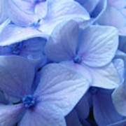 Office Art Prints Blue Hydrangea Flowers Giclee Baslee Troutman Art Print