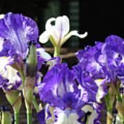 Office Art Prints Iris Flower Botanical Landscape 30 Giclee Prints Baslee Troutman Art Print